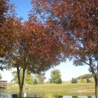 A Hidden Gem - Mansfield Park