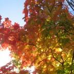 Fall in Muncie